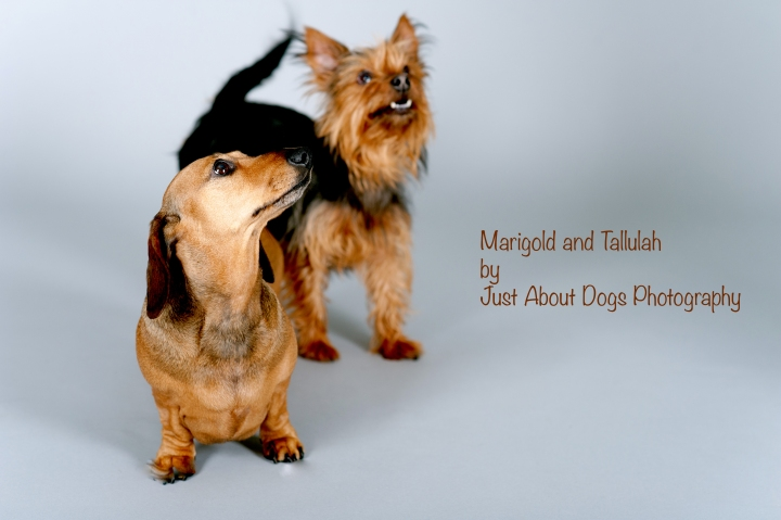 Marigold and Tallulah by Just About Dogs Photography