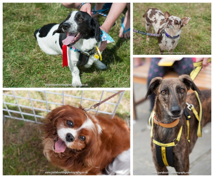 Dogs Trust Canterbury Fun Day by Just About Dogs Photography 06
