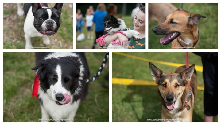 Dogs Trust Canterbury Fun Day by Just About Dogs Photography 09