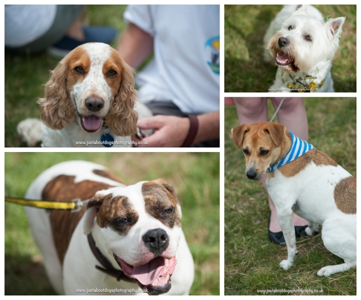 Dogs Trust Canterbury Fun Day by Just About Dogs Photography 11