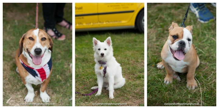 Dogs Trust Canterbury Fun Day by Just About Dogs Photography 13