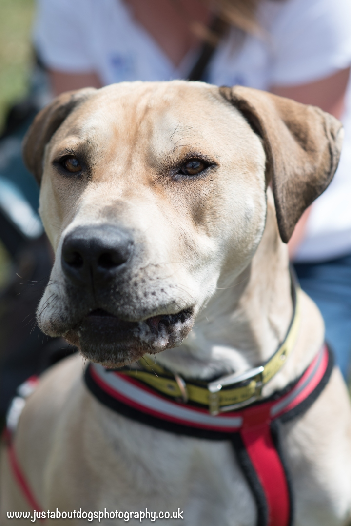 Dogs Trust by Just About Dogs Photography 020
