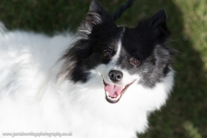 Dogs Trust by Just About Dogs Photography 022