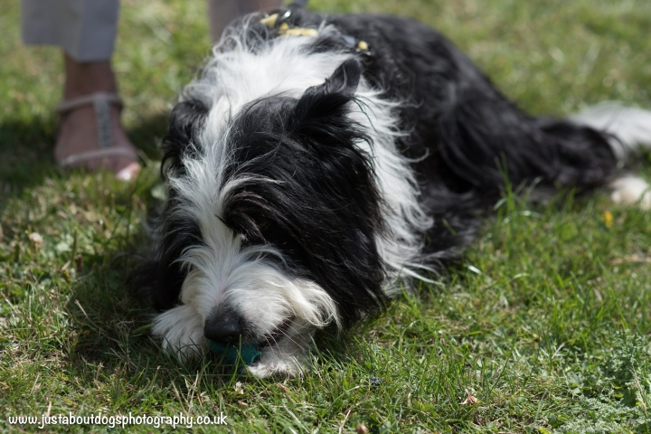 Dogs Trust by Just About Dogs Photography 024